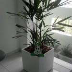 SAM_1519-20120330145530.JPG