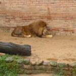 Zoo_041_2012-12-04-12-14-31.jpg