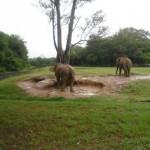 Zoo_051_2012-12-04-12-14-44.jpg